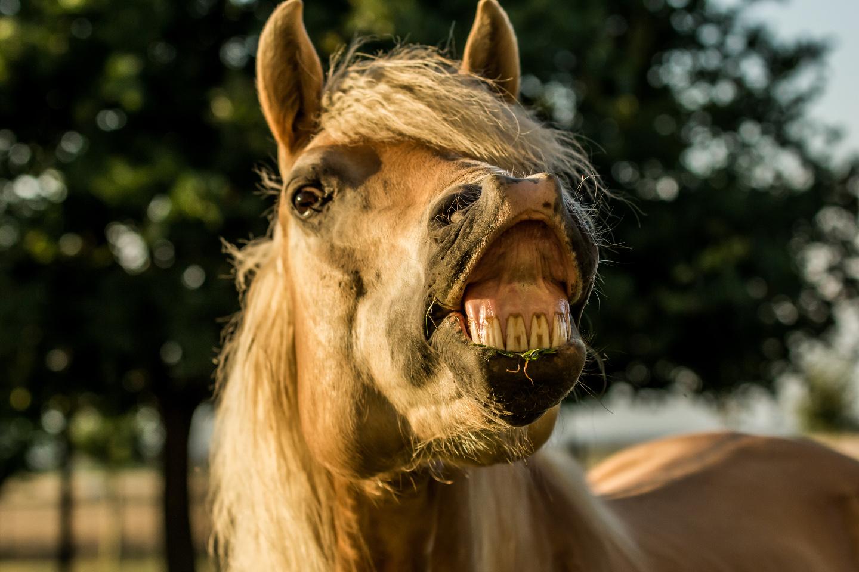 Pferdeshooting günstig vom Pferdefotograf