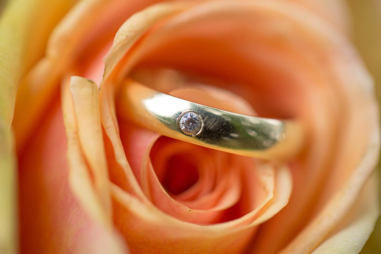 Hautfarbene Rose mit goldenem Ehering